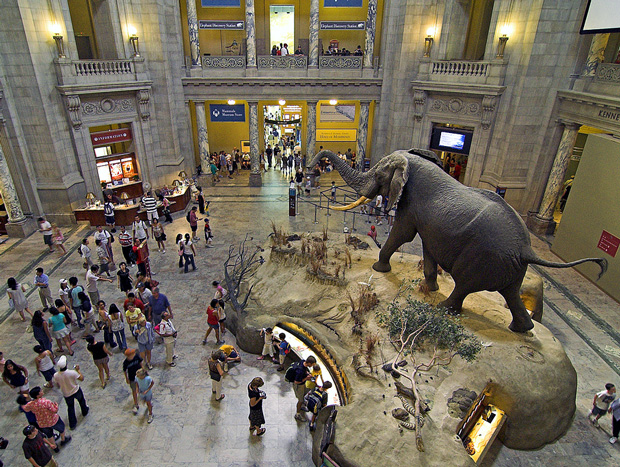 Museum Of Natural History New York Free Days
