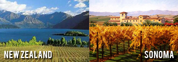 Wine review of Sauvignon Blancs: Sonoma vs. New Zealand