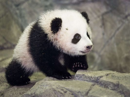 Happy Birthday Bao Bao! 15 Reasons Why We Love The Adorable Panda!