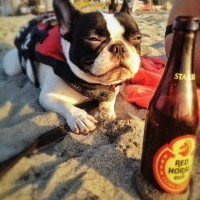 Saturday, Sep 12 – Dogs, Pit BBQ, Beer, Live Music at Branded 72