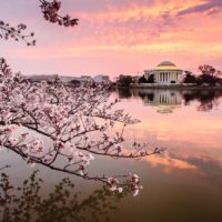 21 Gorgeous Photos Of The Cherry Blossoms in Washington DC